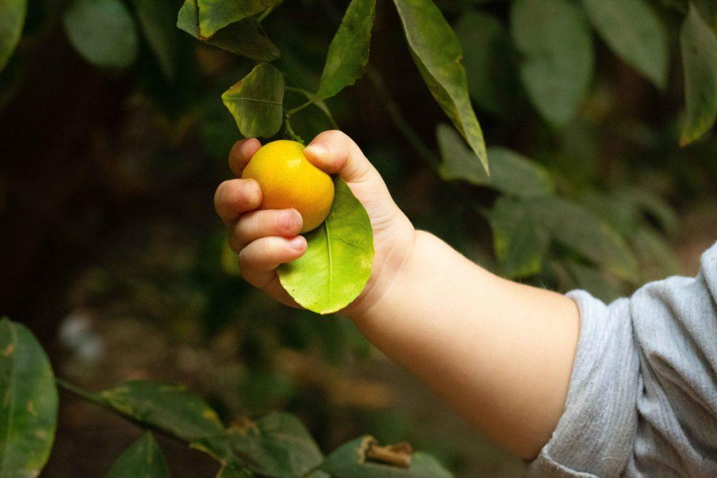 Bébé prêt à manger un citron